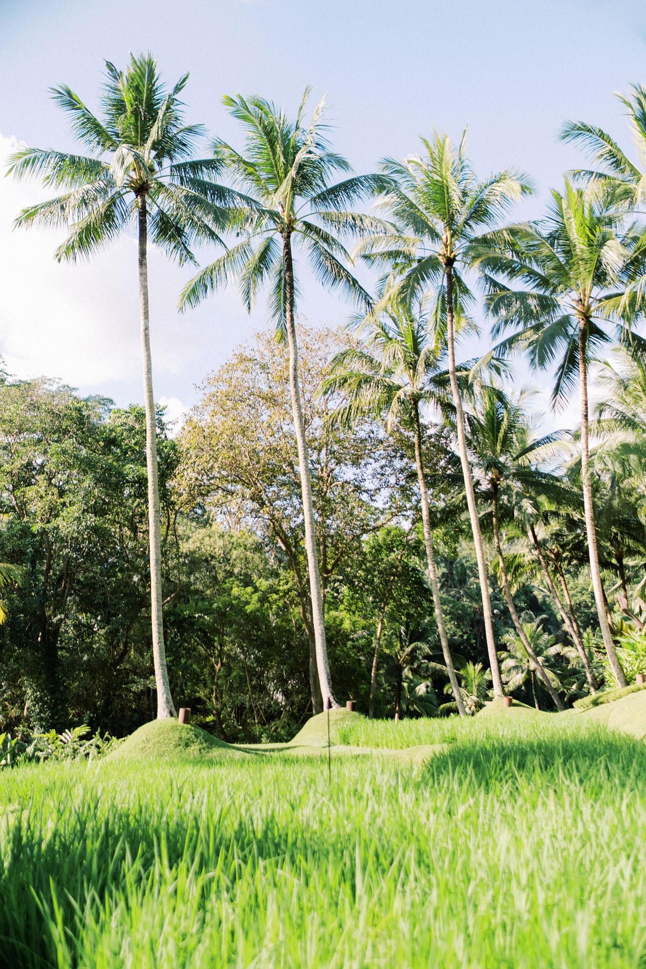 Honeymoon Photo Session at The World's Best Resort 3