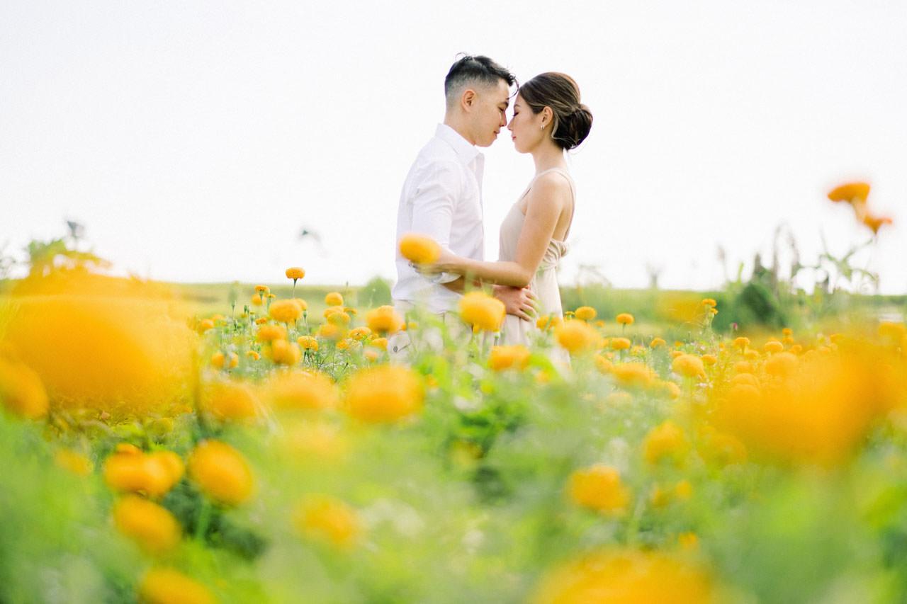 Bali Marigold Flower Field