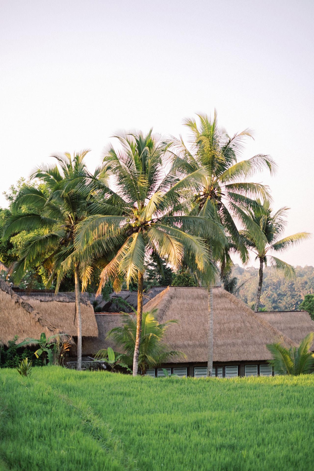 A&R: Dreamy Ubud Resort Honeymoon Photoshoot 4