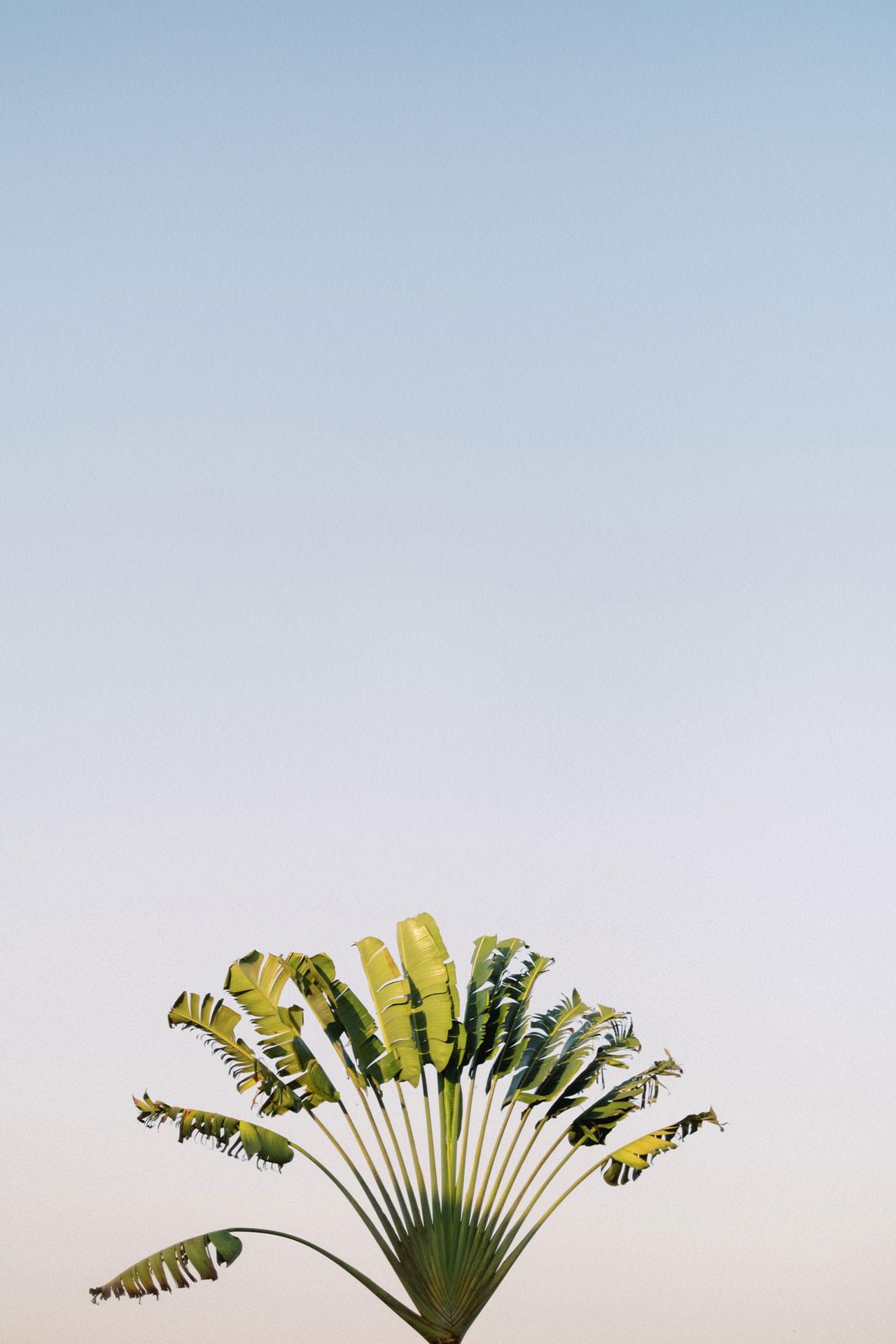 A&R: Dreamy Ubud Resort Honeymoon Photoshoot 5