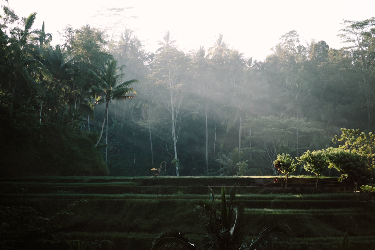 Bob & Vanessa: Ubud Bali Surprise Proposal Photography 15
