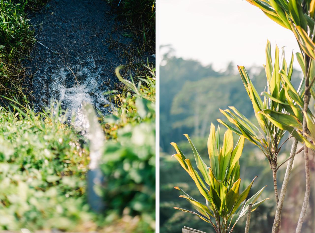 A&K: Magical Morning Photography at Tegalalang Rice Terrace 1