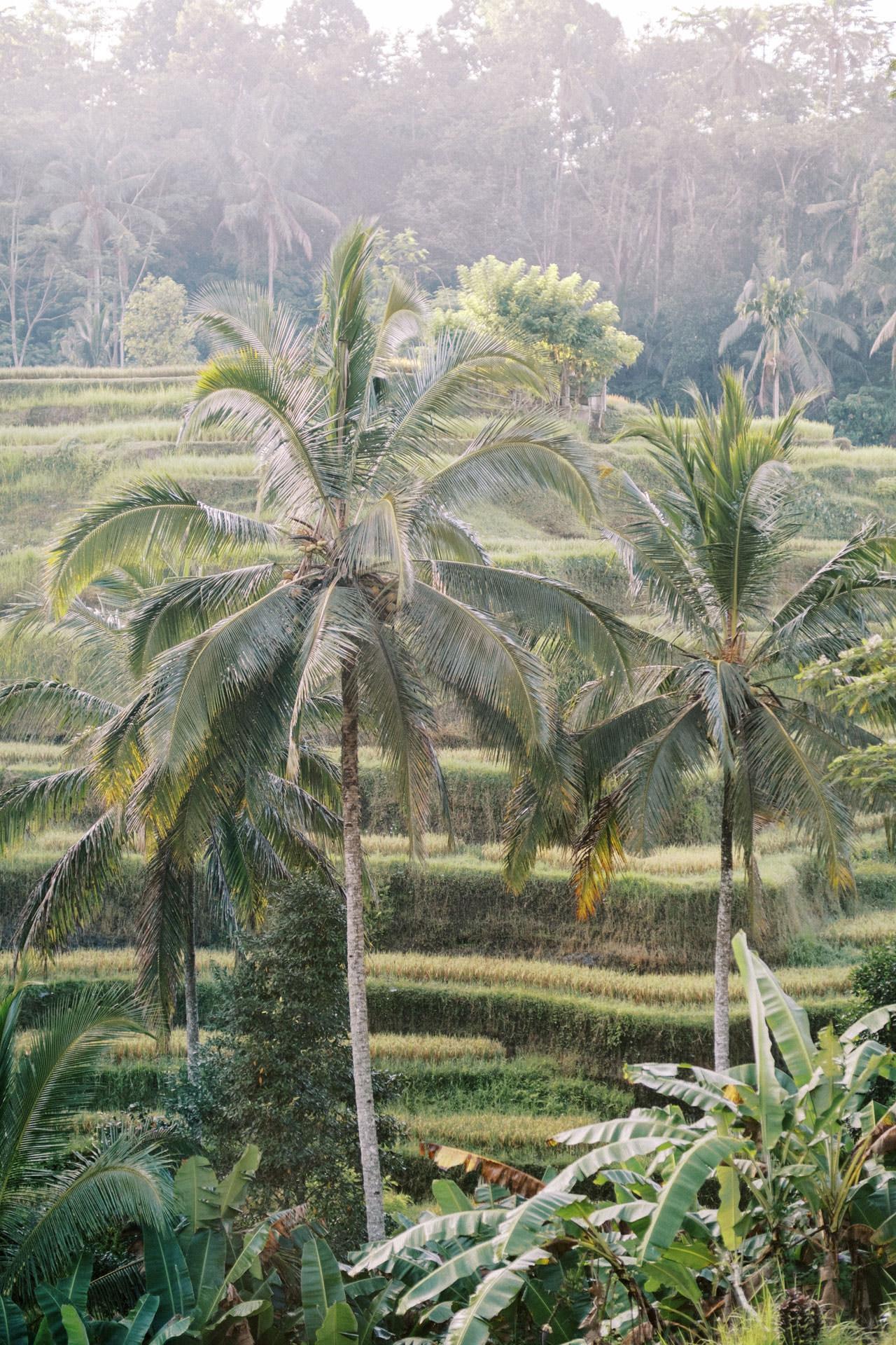 Kayon Jungle Resort Ubud Maternity Photo 42