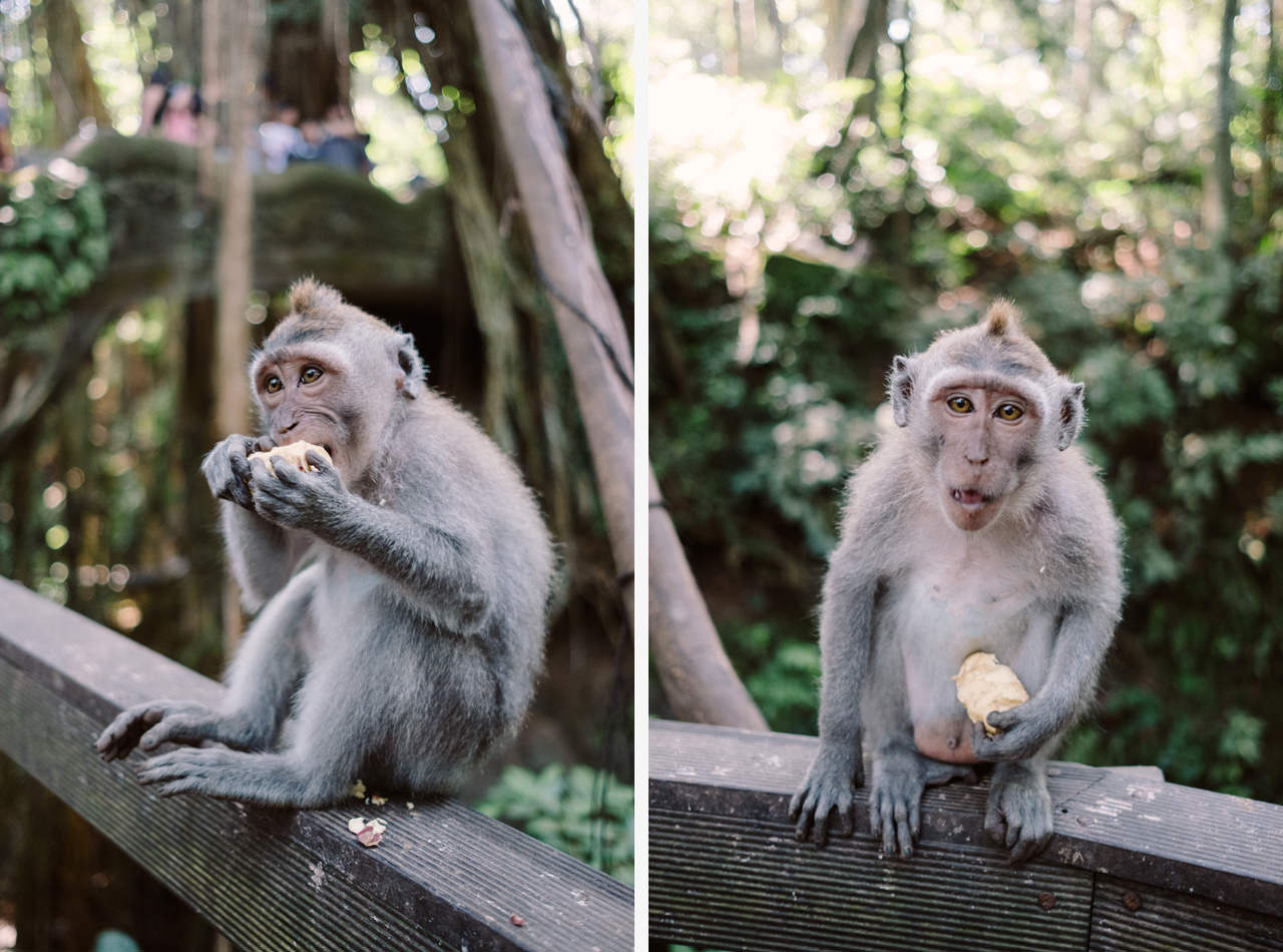 L&C: Adventurous Bali Honeymoon Photo at Monkey Forest 6