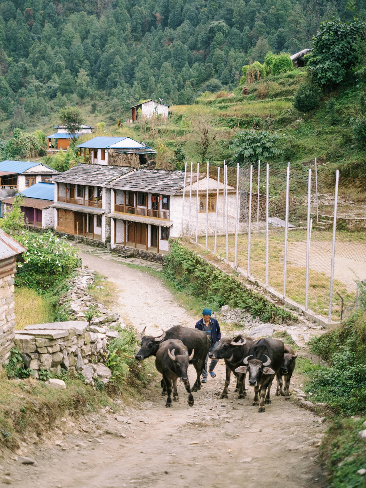 Nepal 2019 - Trekking Annapurna Base Camp 57