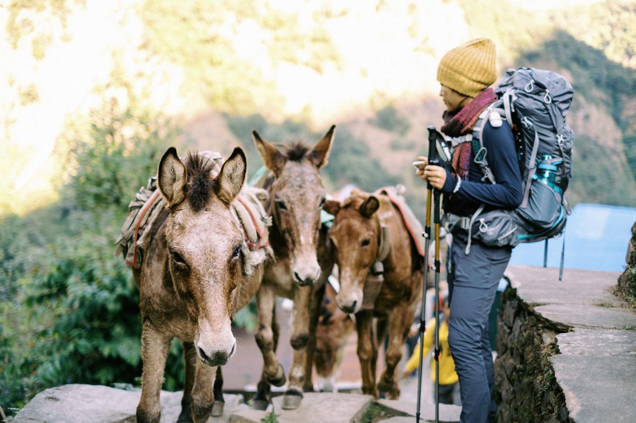Nepal 2019 - Trekking Annapurna Base Camp 77