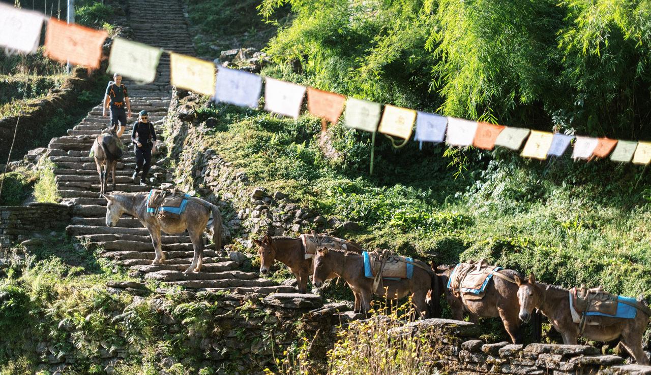 Nepal 2019 - Trekking Annapurna Base Camp 96